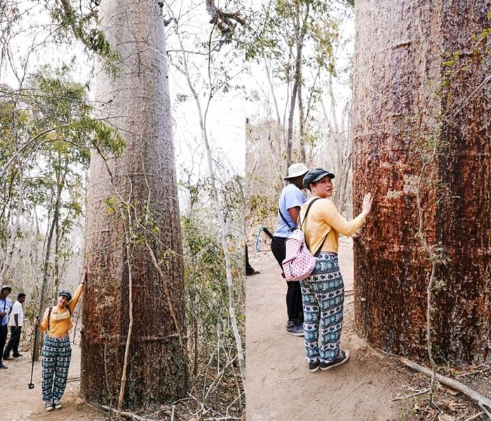 蜜月不正經@馬達加斯加/飛到穆隆達瓦、顛屁股2小時看巨無霸猴麵包樹超值得